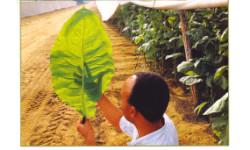 От крошечных зернышек до ароматных листьев